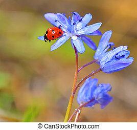 mariquita, flores, tiempo, violeta, primavera