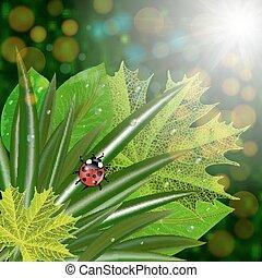mariquita, hojas, verde