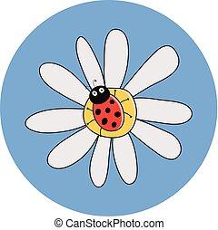 mariquita, vector, flor, rojo, camomile