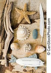 maritime Collage - Assortment of beach stuff