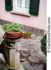 Marjoram in a flowerpot under the window on the post of a street tap.