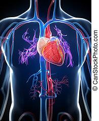 markerad, mänsklig hjärta