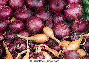 market., 농부, 양파, 신선한