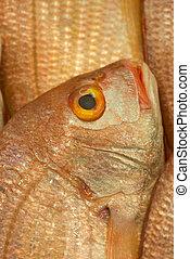 Market fish display closeup