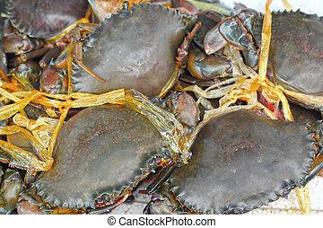 market., krabbe, frisch