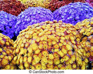 Marketplace with colorful autumn chrysanthemums