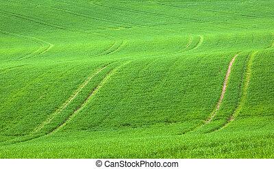 markierungen, in, der, grünes feld