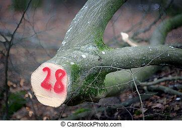 marking tree trunk