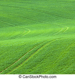 marks in the green field