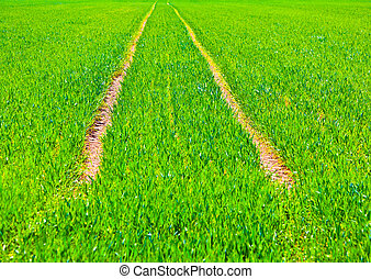 marks of wheels in green field