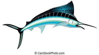 marlin fish isolated