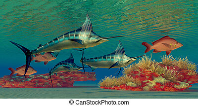 Marlin Reef - Blue Marlin and Humpback Red Snapper fish...