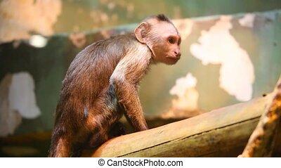 marmoset - Marmoset run from branch.