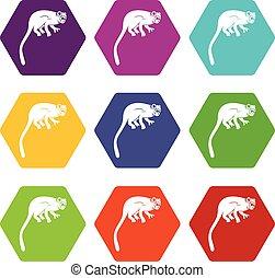 Marmoset monkey icon set color hexahedron - Marmoset monkey...