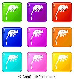 Marmoset monkey icons 9 set - Marmoset monkey icons of 9...