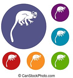Marmoset monkey icons set in flat circle red, blue and green...