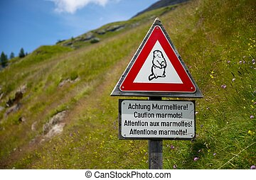 Caution marmots traffic sign on an alpine road