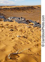 maroc, pas, désert, fossile, vieux