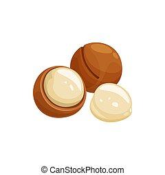 Maroochi bauple or macadamia nuts in shell isolate