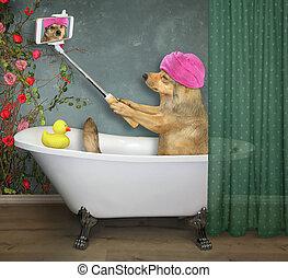 marques, chien, 3, selfie, bain