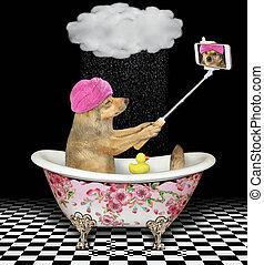 marques, selfie, bain, 2, chien