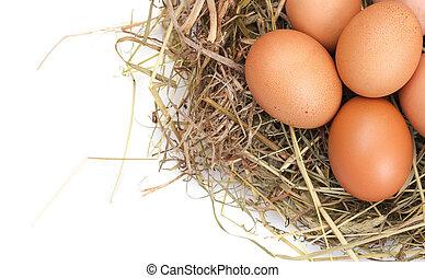 marrón, huevos, en, un, nido
