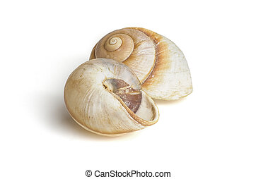 marrón, mar, dos, caracol, conchas