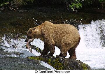 marrón, pez, oso