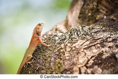 marrón, reptil, jardín, árbol, fauna, asia, lagarto,...