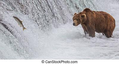 marrón, salmón, arriba, oso, bajas, mirar, saltar