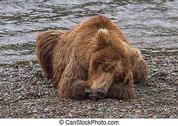 marrón, toma, siesta, oso