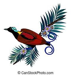 marrón, wilson, color, pájaro paraíso, aislado, s, rama