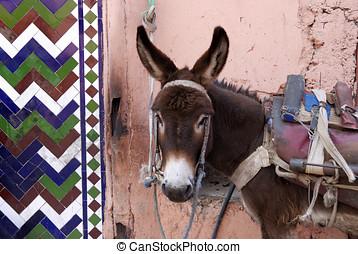 Marrakesh Morocco, urban donkey in a small street
