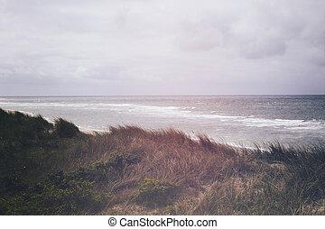 marram herbe, sable, list., dune., couvert, sylt, plage,...