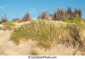 marram, sable, allemagne, dune, herbe, langeoog