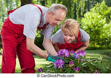 Married couple take care of the flowers