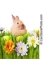 marrom, capim, ovos, verde, coelho, bebê, flores, páscoa