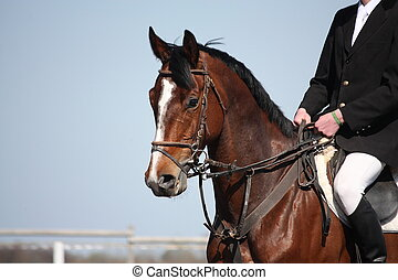 marrom, desporto, cavalo, retrato, durante, s