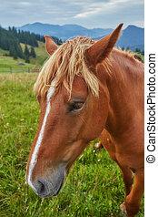 marrom, gramado, cavalo pasta