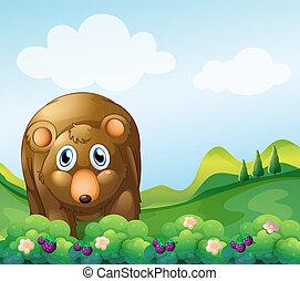 marrom, jardim, urso
