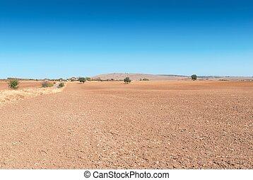 marrom, lavrou campo