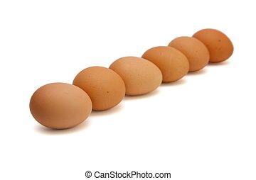 marrom, ovos, seis, isolado, fila