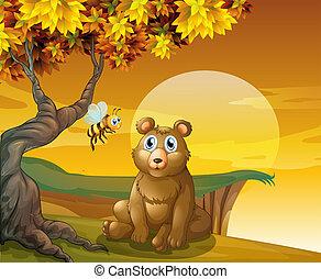 marrom, penhasco, urso, sentando