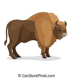 marrone, aurochs, colore, isolato, animale, corna, bianco