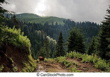 marrone, camminare, mucca, montagne, collina, fondo