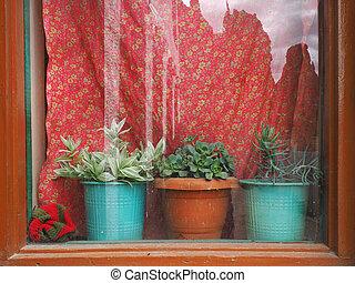 marrone, cornice, curtains:, vendemmia, tre, ma, houseplants, luminoso, finestra, argilla, pots., davanzale, rosso