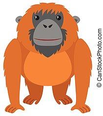 marrone, pelliccia, orangutan