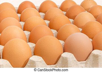 marrone, primo piano, uovo, uova, fuoco, selettivo, vassoio