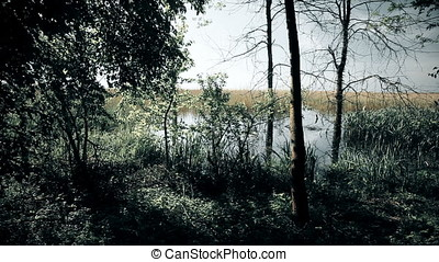 Marsh Forest Border at Twilight - Marsh forest border at...