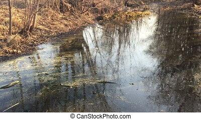 Marsh grass and mud water.